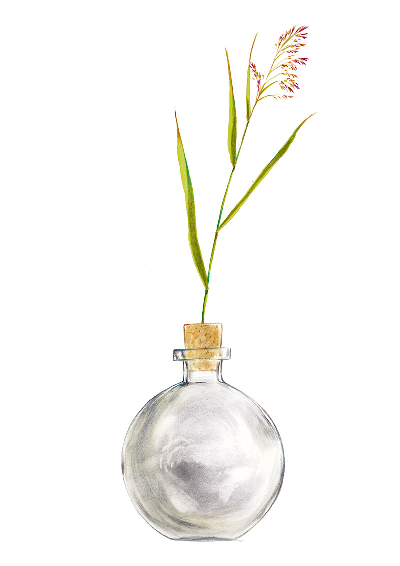 Empty bottle with a blade of grass on the cap. The bottle is part of a collection assembled by a child. Illustration for a book entitled