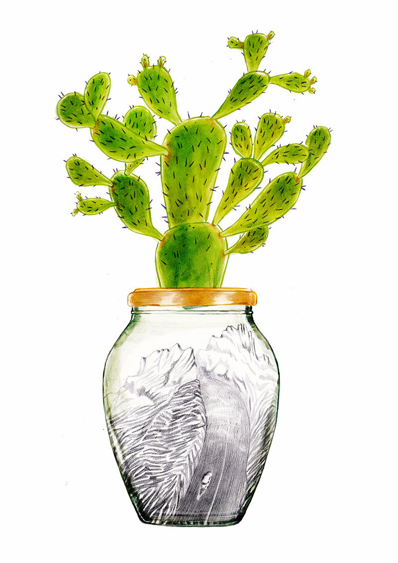Jam jar with a cactus on the cap. Inside there is a car that travels along a mountain road. The jar is part of a collection of bottles assembled by a child. Illustration for a book entitled