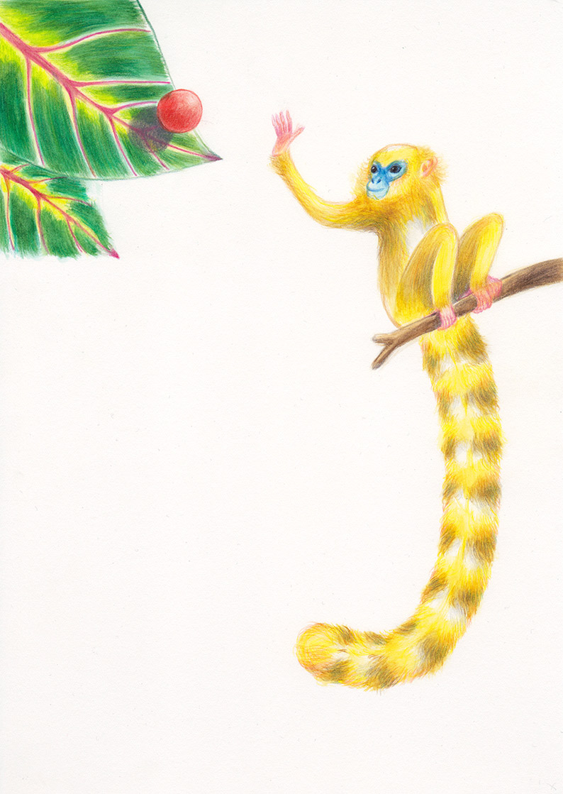 IA yellow monkey, with a very long tail, is trying to catch a red ball that is about to bounch on a big leaf. Illustation from a book project which is entitled Rae's gift