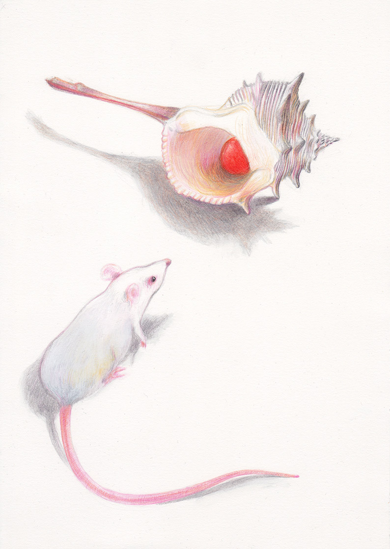 A white mouse is watching a little red ball that is hiding inside a white shell. Illustation from a book project which is entitled Rae's gift
