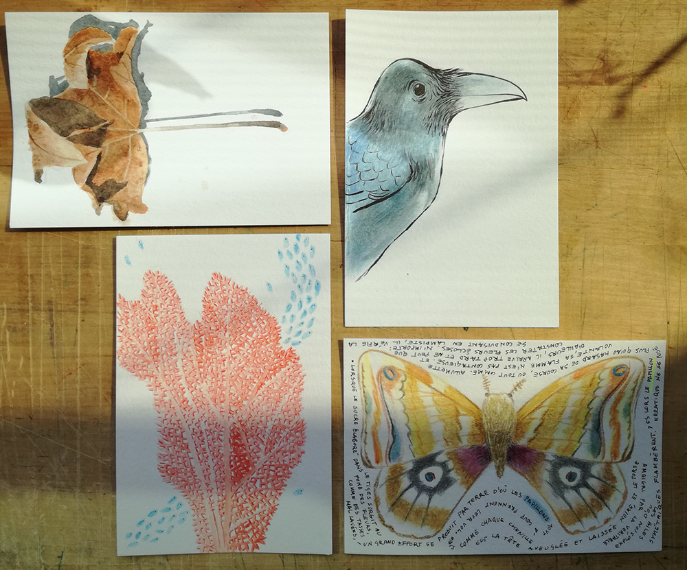 Four postcards: a leaf, a crow, a coral and a butterfly