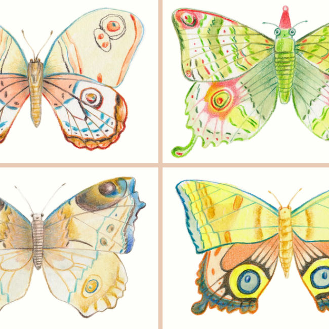 Four colorful butterflies postcards